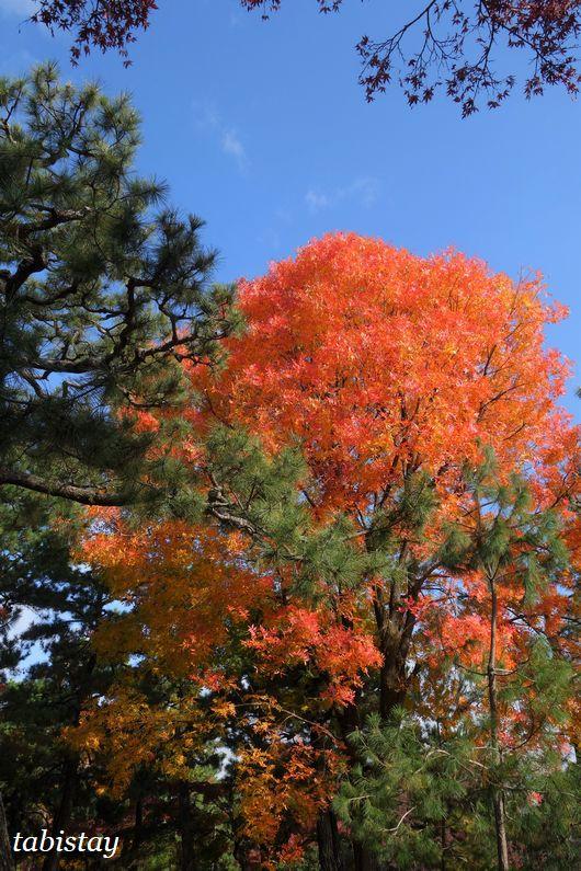 京都 建仁寺 黄金の紅葉